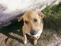 Implantação de Banco de Ração e Utensílios para animais é aprovada