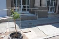 Novo ipê é plantado em frente à Câmara